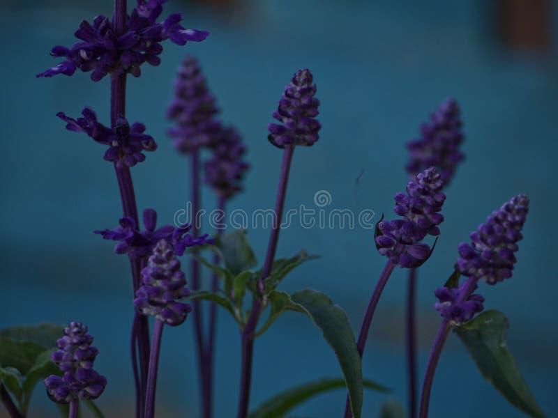 Unfocus prudente dei fiori fotografia stock