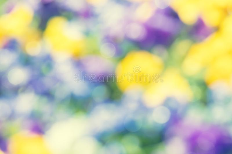 Unfocused blurred blossoming pansies flowers stock image