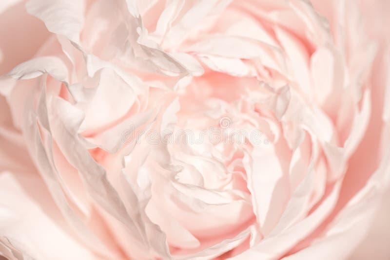 Unfocused plamy różani płatki, abstrakcjonistyczny romansowy tło, pastel i miękka kwiat karta, fotografia stock