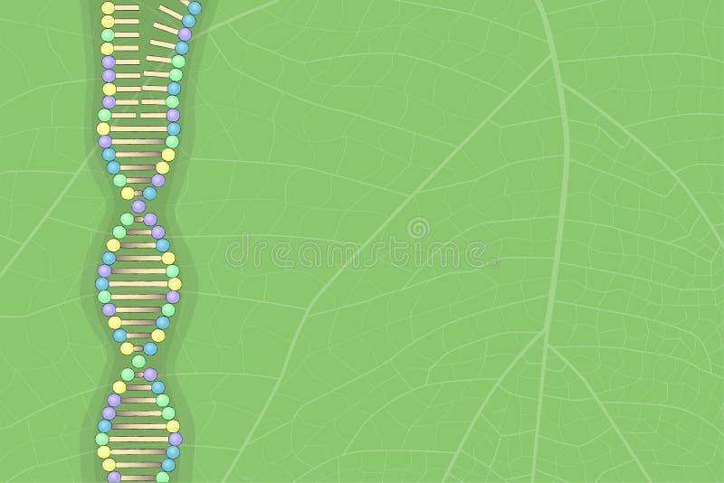 Unfolding DNA molecule on leaf, vector illustration. Green floral nature background royalty free illustration