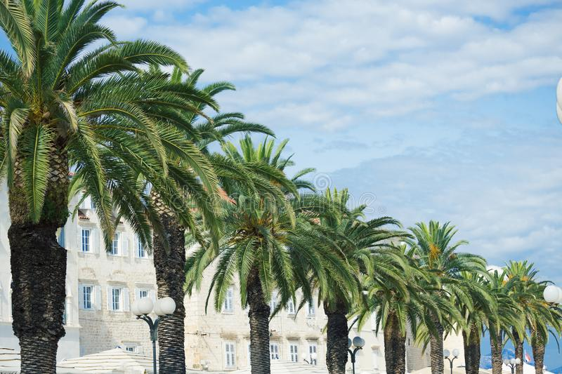 Unforgettable view at town Trogir,and palm trees, old touristic place in Croatia Europe. / Trogir town coastal view. / Selective. Focus stock photo