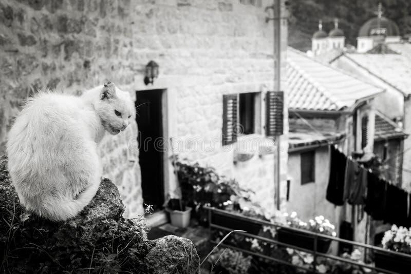 Unfriendly white cat outside stock photography