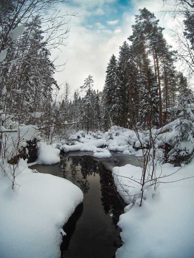 Unfrozen zatoczka w śnieżnym sosnowym lasowym zima krajobrazie fotografia stock