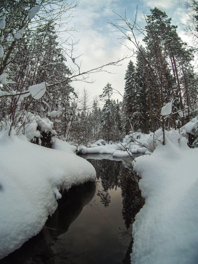 Unfrozen zatoczka w śnieżnym sosnowym lasowym zima krajobrazie zdjęcia royalty free