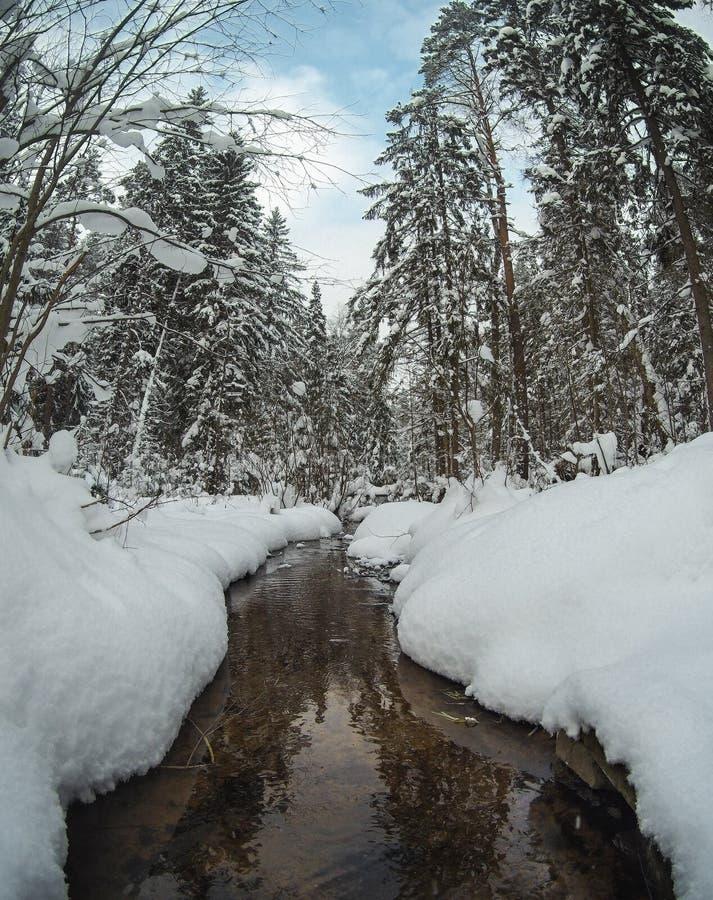 Unfrozen zatoczka w śnieżnym sosnowym lasowym zima krajobrazie obrazy royalty free