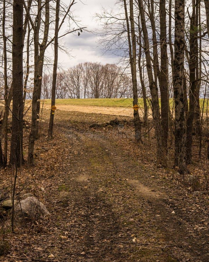 Unfruchtbarer Stand von den Bäumen gesehen von der Spur, die vom Holz im Fall auftaucht lizenzfreie stockfotografie