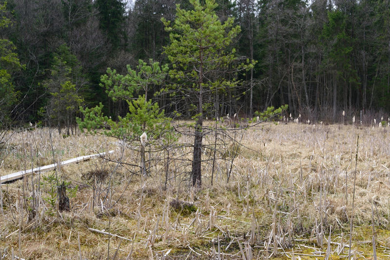 Unfruchtbares Heidemoor in Österreich lizenzfreies stockfoto