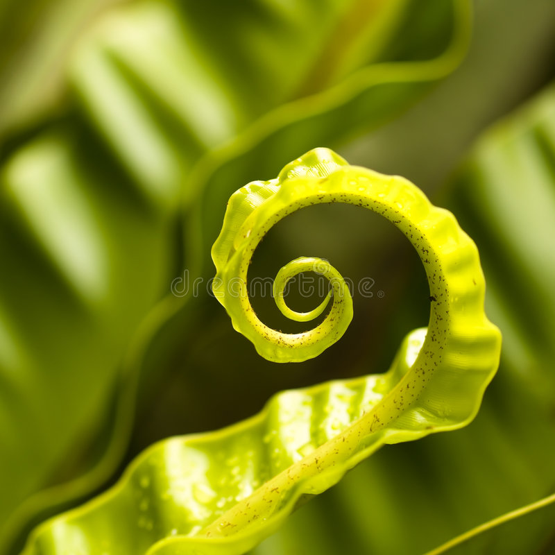 Download Unfurling Curls stock image. Image of shape, fern, nest - 5352095