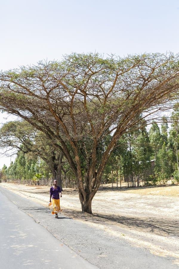 Ung afrikansk dam som går ner en lantlig väg i Etiopien royaltyfri bild