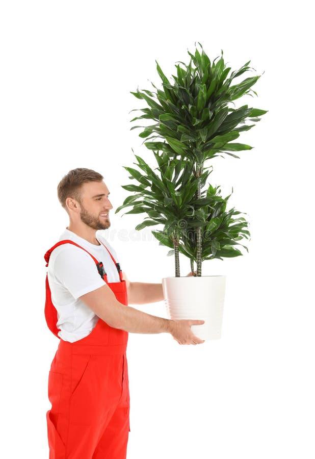 Ung arbetare som bär den isolerade inlagda växten R?rande service arkivbilder