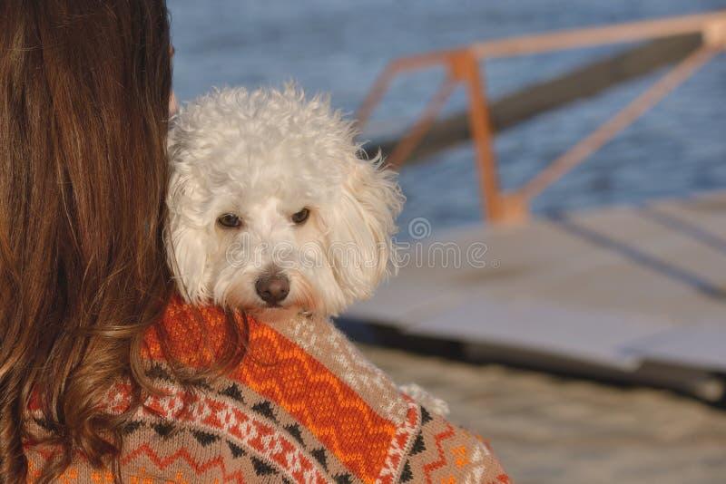 Ung attraktiv flicka med hennes maltese hund arkivbilder