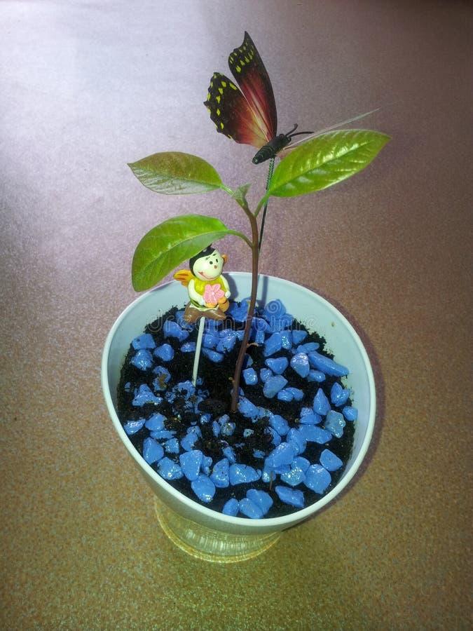Ung avokado royaltyfri foto
