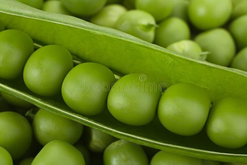 Ung bakgrund för gröna ärtor royaltyfri foto