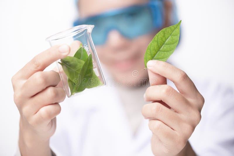 Ung bioteknikforskarekemist som arbetar i labb royaltyfri bild