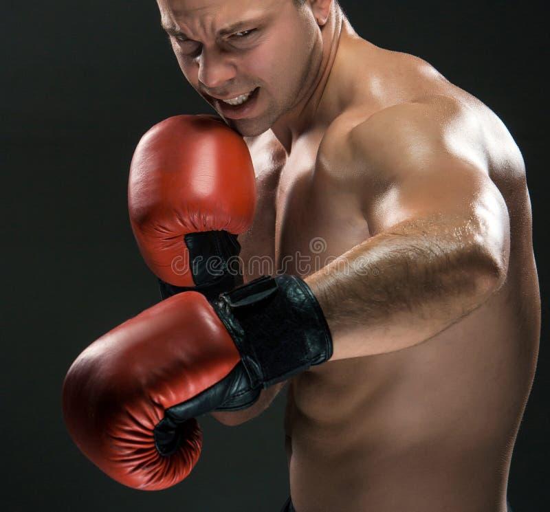 Ung boxareboxning fotografering för bildbyråer