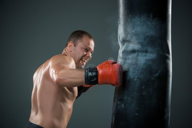 Ung boxarekämpe royaltyfri fotografi