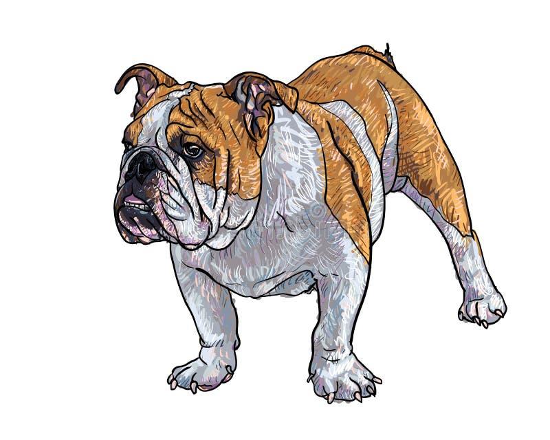 Ung bulldogg royaltyfri illustrationer