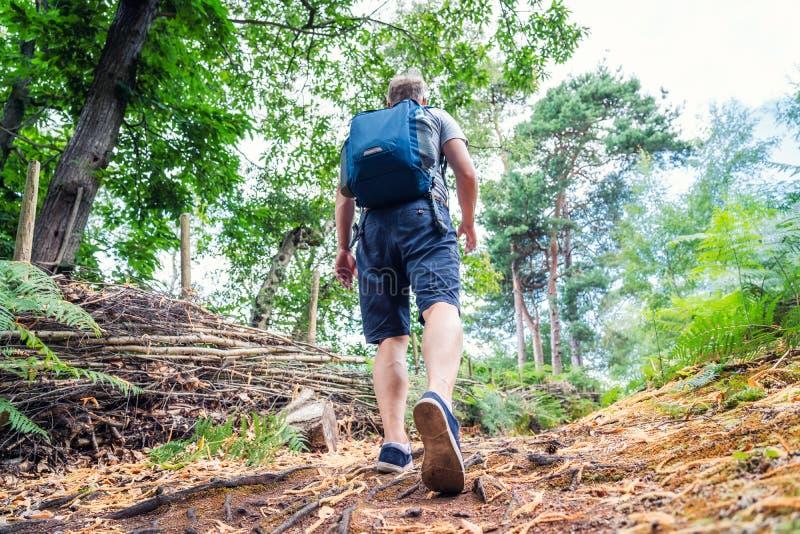 Ung caucasian man som går med ryggsäcken i trän från tillbaka Turist för nedersta sikt som spårar genom hela sommarskogaffärsföre royaltyfria foton