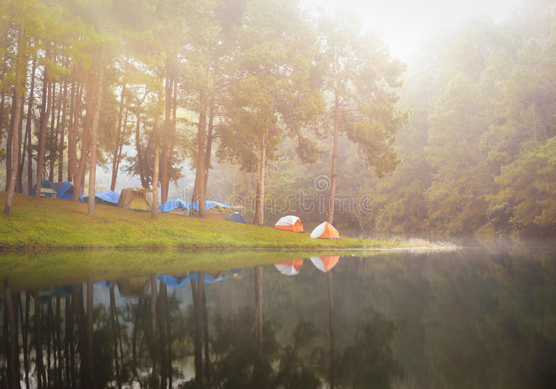 Ung da pungência, reflexão do pinheiro em um lago, meahongson, tailandês foto de stock royalty free