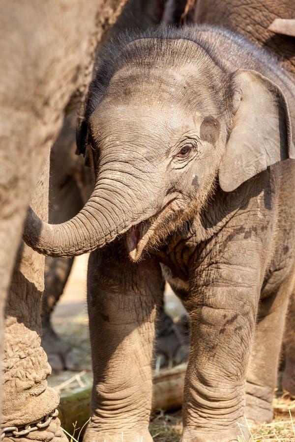 Ung elefant royaltyfri fotografi