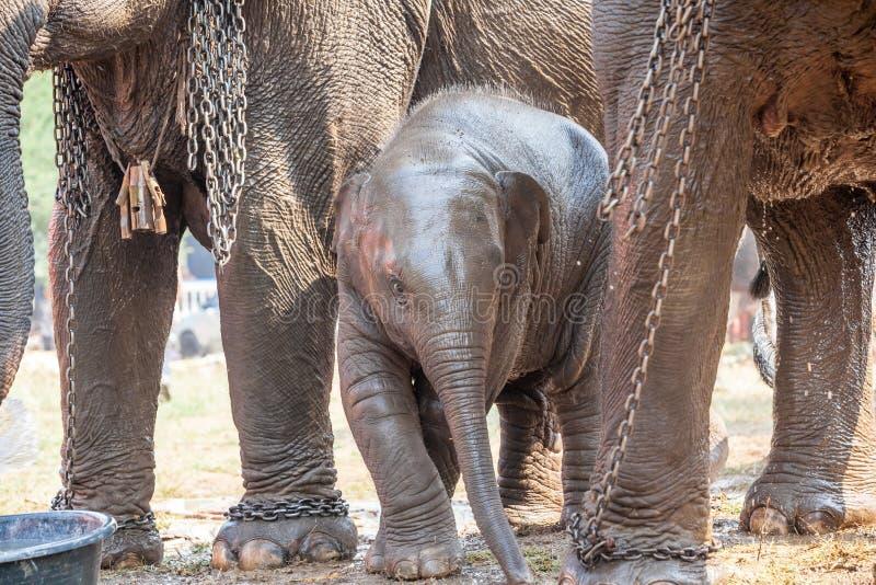 Ung elefant royaltyfria bilder