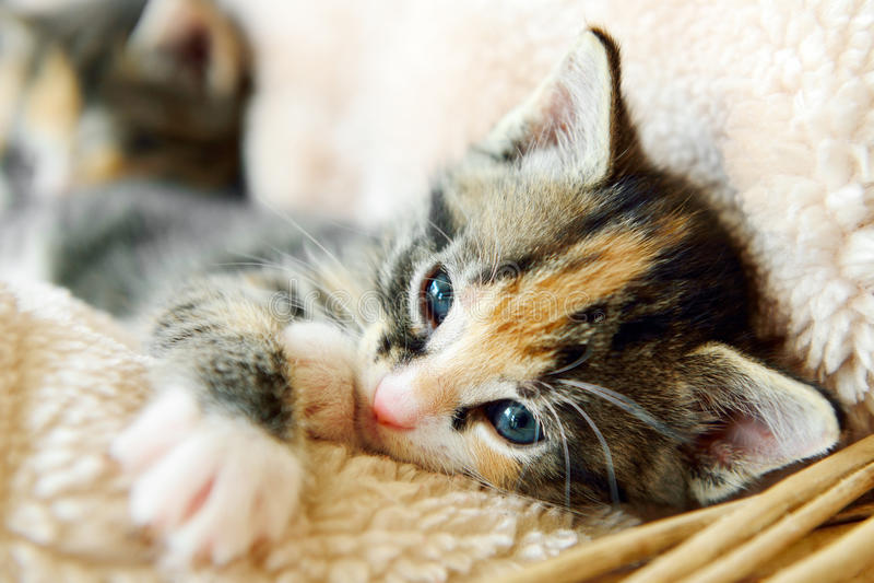 Ung förtjusande kattunge i en korg royaltyfria bilder