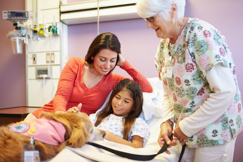 Ung flicka som besökas i sjukhus av terapihunden arkivbilder