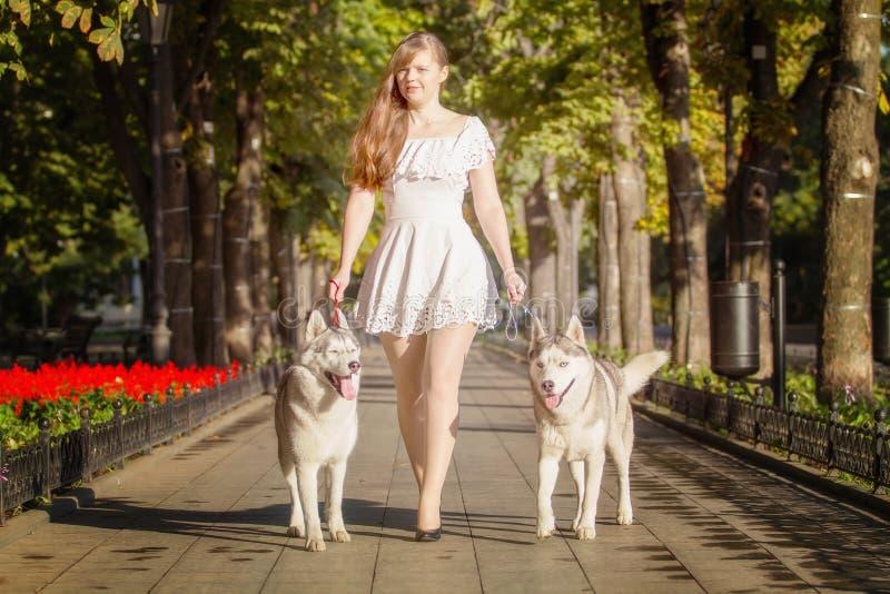 Ung flicka som går ner gatan med två hundkapplöpning fotografering för bildbyråer