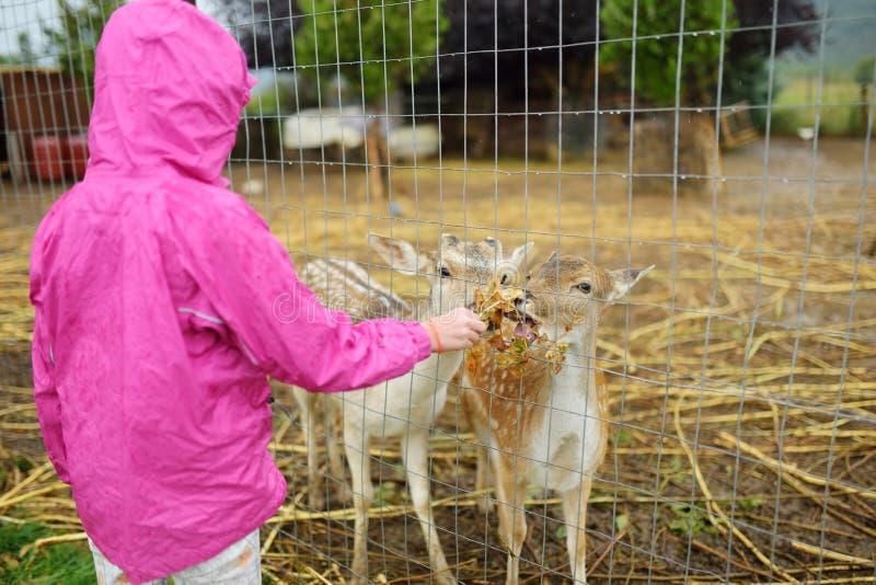 Ung flicka som matar lösa deers på en zoo på regnig sommardag Barn som håller ögonen på renar på en lantgård arkivbilder