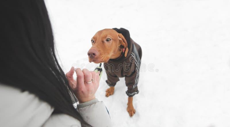 Ung flicka som spelar med en hund på en snöig vinterdag Gå med hunden i vintersäsongen royaltyfri foto