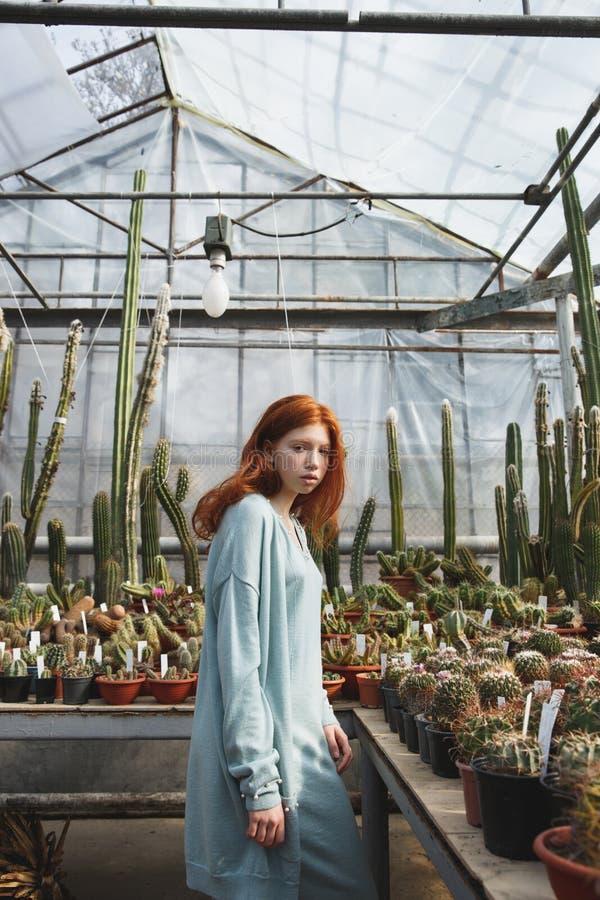 Ung flickaanseende i ett glashus mycket av kakturs fotografering för bildbyråer