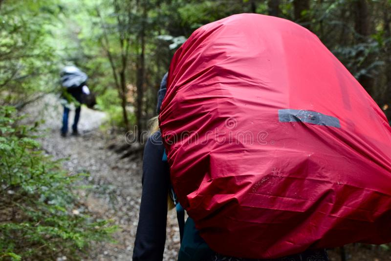 Ung flickahandelsresanden med ryggsäcken går på en slinga i trän fotografering för bildbyråer