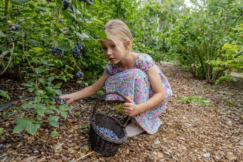 Ung flickaplockningblåbär 02 arkivbild