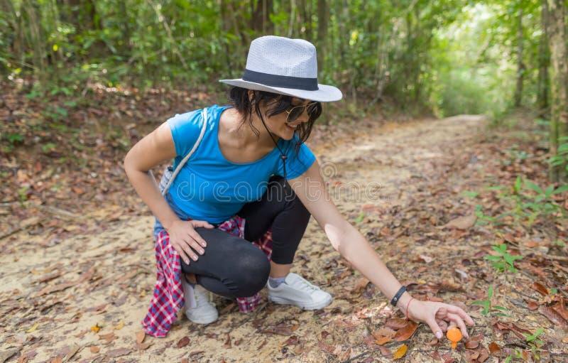 Ung flickaplockningchampinjon från jordning, medan Trekking på Forest Path, handelsresandekvinna med ryggsäcken på vandring arkivbilder