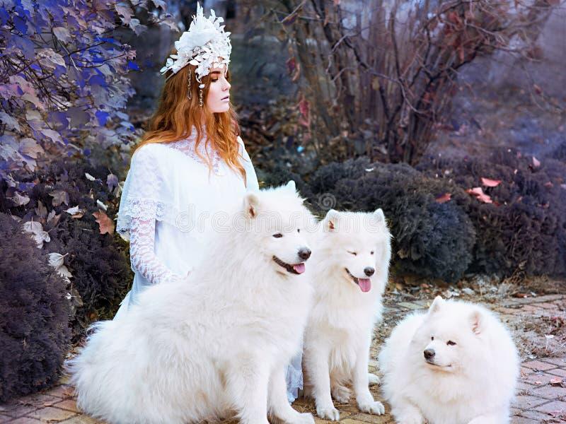 Ung flickasnöprinsessa i lång vit klänning med tre utomhus- samoyeds arkivfoto