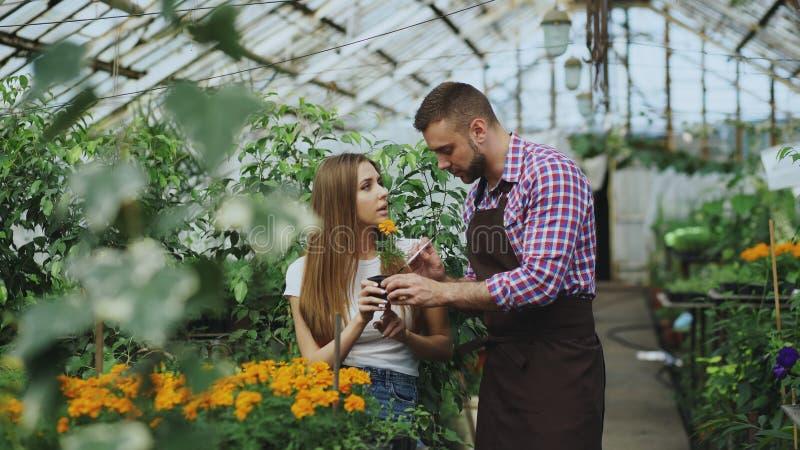 Ung gladlynt manblomsterhandlare som talar till kunden och ger rådgivning, medan arbeta i trädgårds- mitt royaltyfria foton