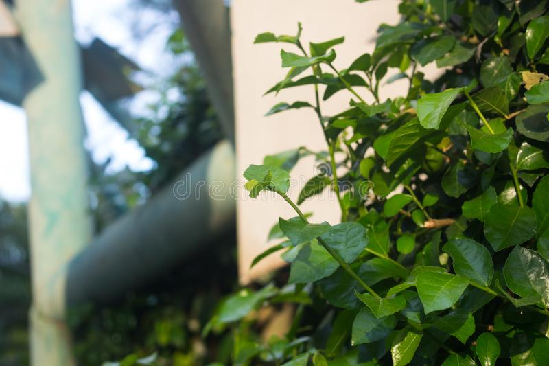 Ung grodd som växer från trädet, Thailand royaltyfri foto