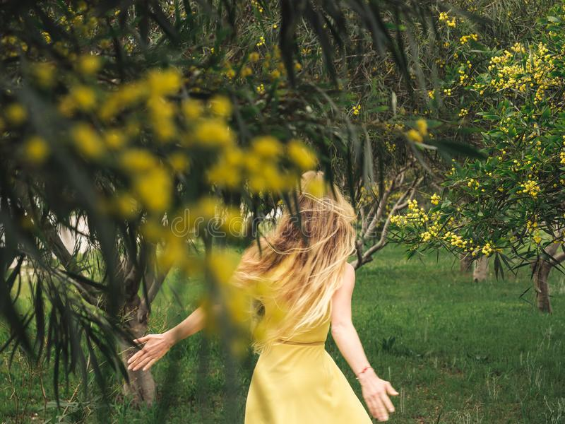 Ung h?rlig le kvinna i tr?d f?r guld- wattle f?r v?r australiska arkivbild