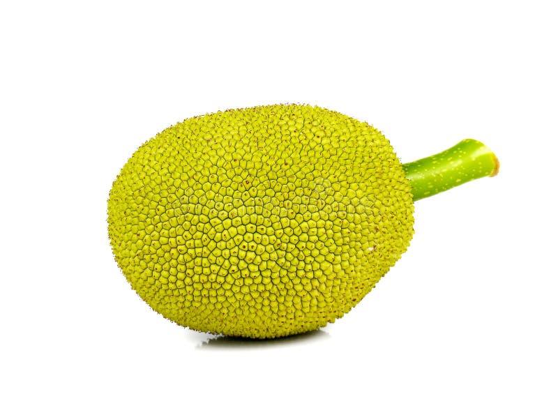 Ung Jackfruit på vit bakgrund arkivfoton
