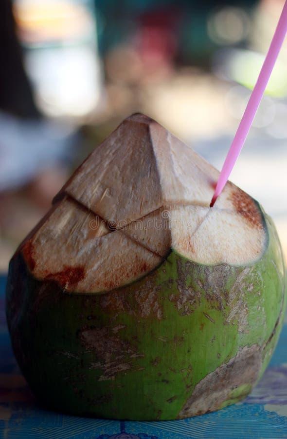 Ung kokosnöt royaltyfria bilder