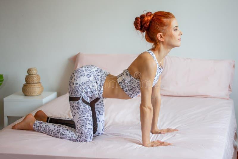 Ung konditionkvinna i övande yoga för sportwear på säng i sovrum hemma i morgon sportflicka som gör katten - kon poserar övning royaltyfri foto