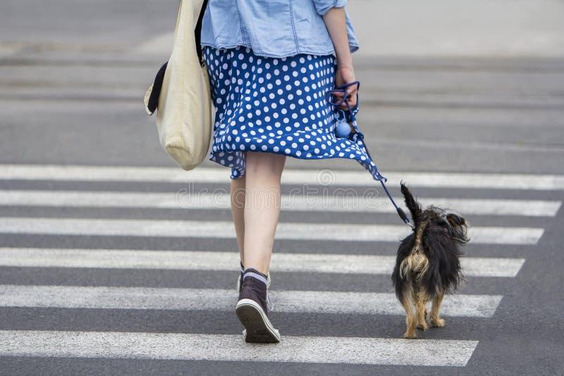 Ung kvinna med att gå för hund arkivfoto