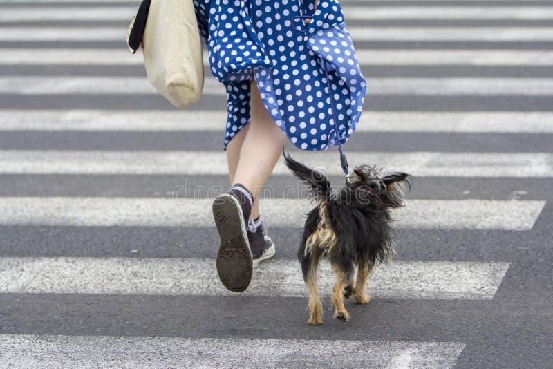 Ung kvinna med att gå för hund fotografering för bildbyråer