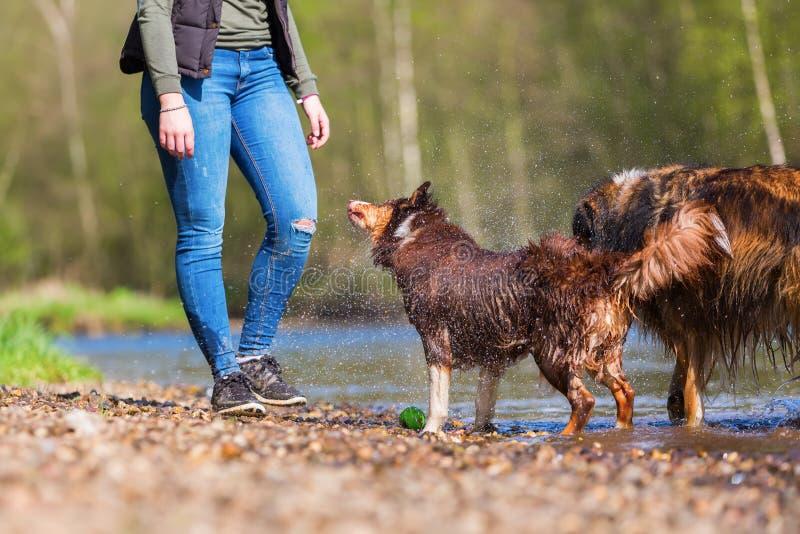 Ung kvinna med två hundkapplöpning på floden royaltyfria bilder