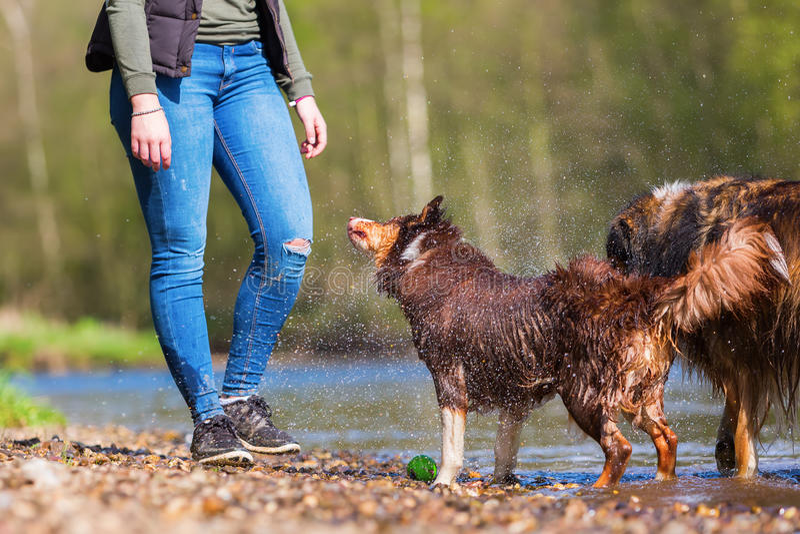 Ung kvinna med två hundkapplöpning på floden arkivfoto