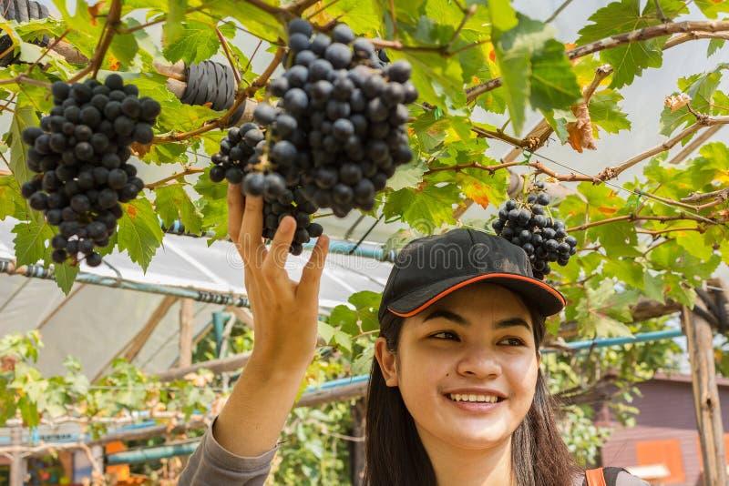 Ung kvinna med utomhus- druvor royaltyfri fotografi