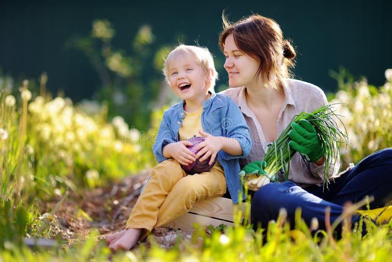 Ung kvinna och hennes förtjusande liten son som tycker om skörden fotografering för bildbyråer