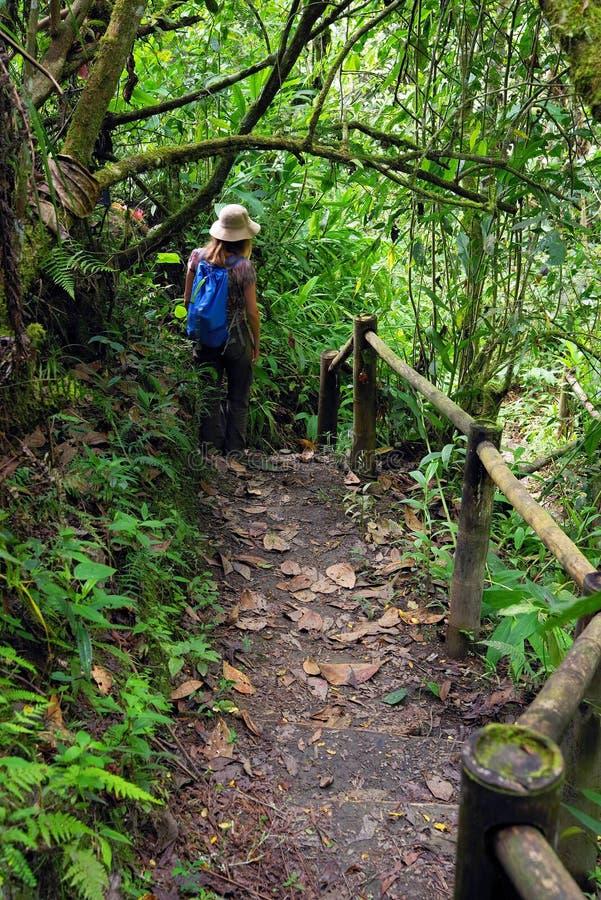 Ung kvinna på en bana i djungeln i den Cordiliera centralen royaltyfri fotografi
