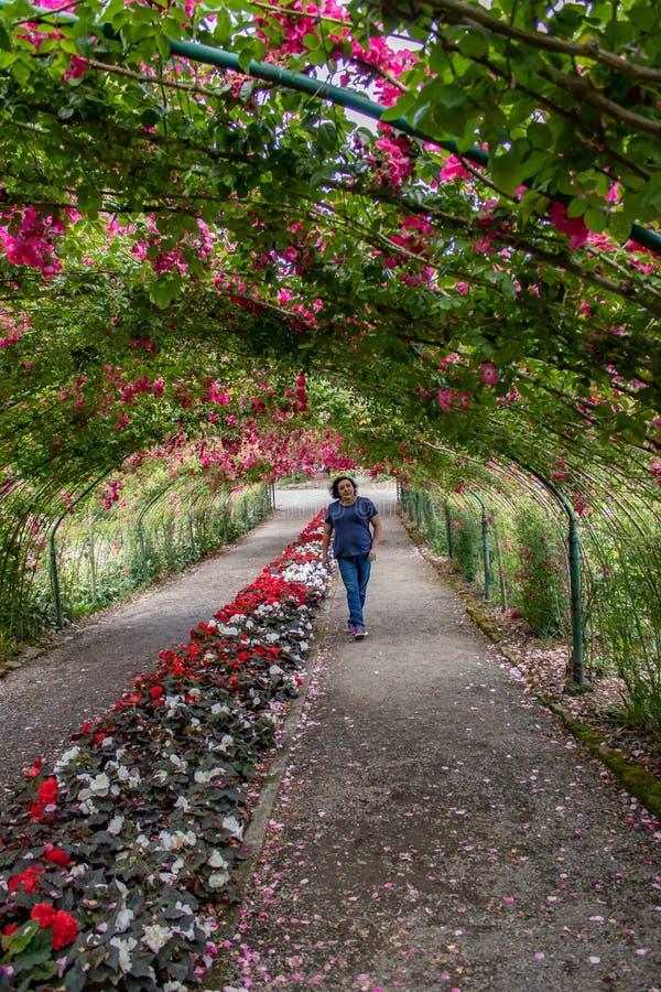 Ung kvinna på slutet av en tunnel av rosor royaltyfri foto
