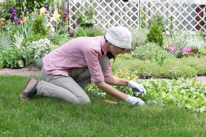 Ung kvinna som arbetar i den trädgårds- sängen arkivbilder